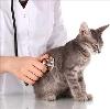 Ветеринарные клиники в Месягутово